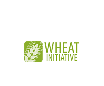 Logo INRA Wheat Initiative